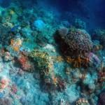 Deep ocean - PXBY