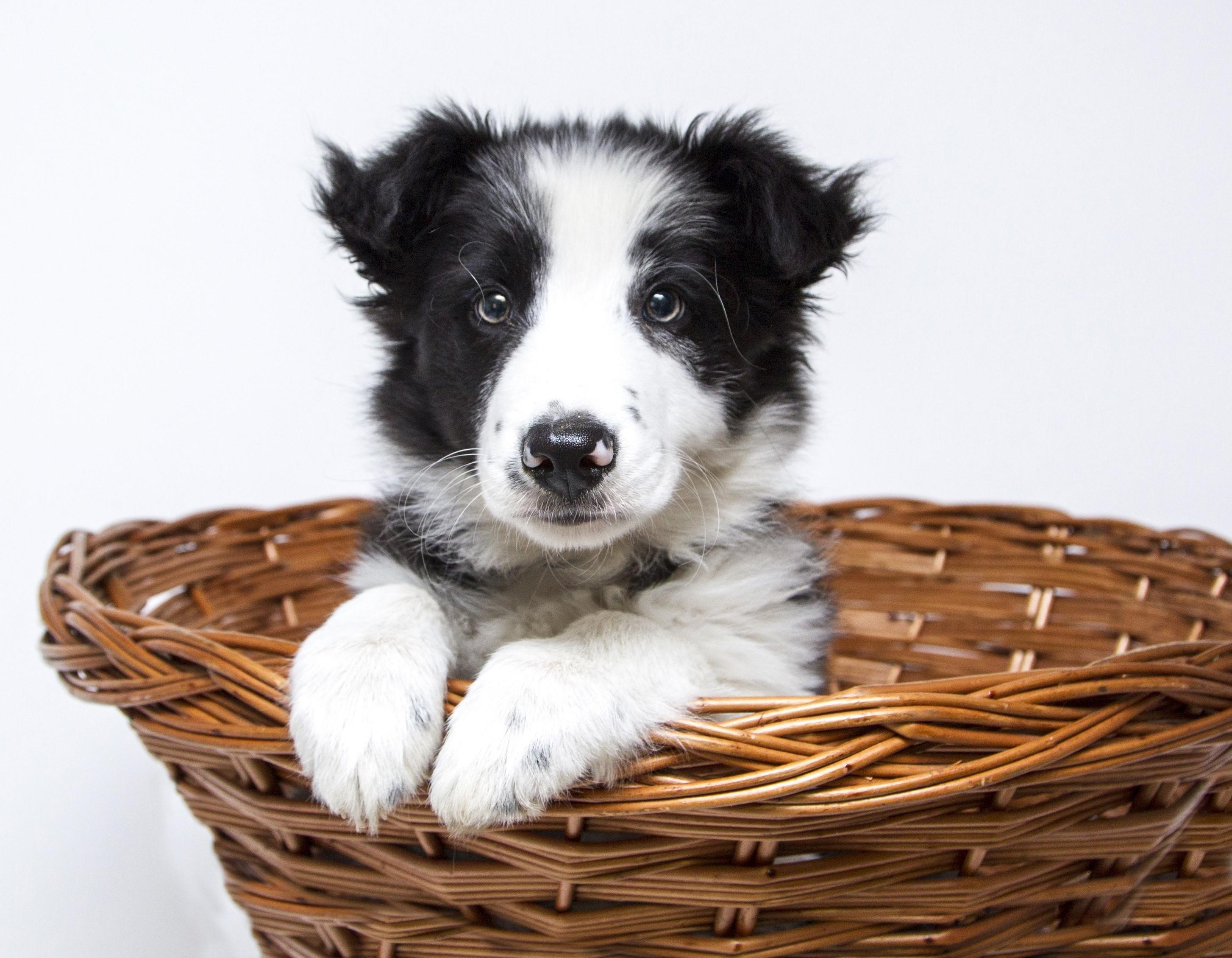 Canine Essentials